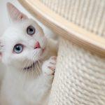 Wat zijn de dagelijkse benodigdheden van een kitten?